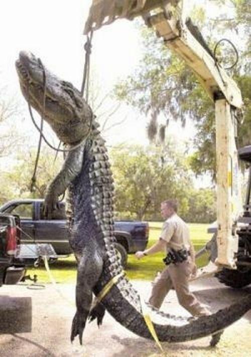 Ridiculously oversized animals! (35 pics)