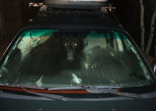 A real car thief in action. Scary! (3 pics)