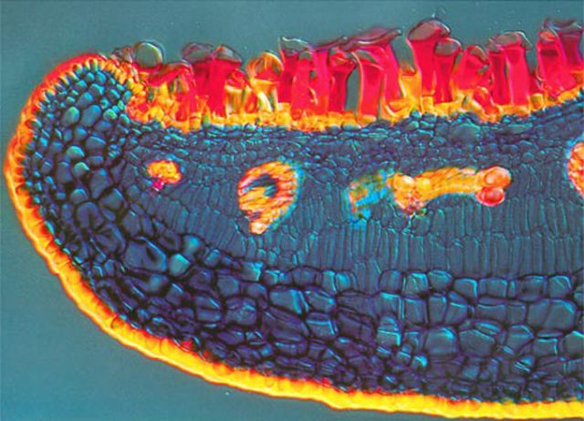Amazing microscope photography that will make you say wow! (50 pics)