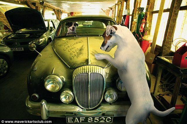 Great auto repair shop staff (12 pics)