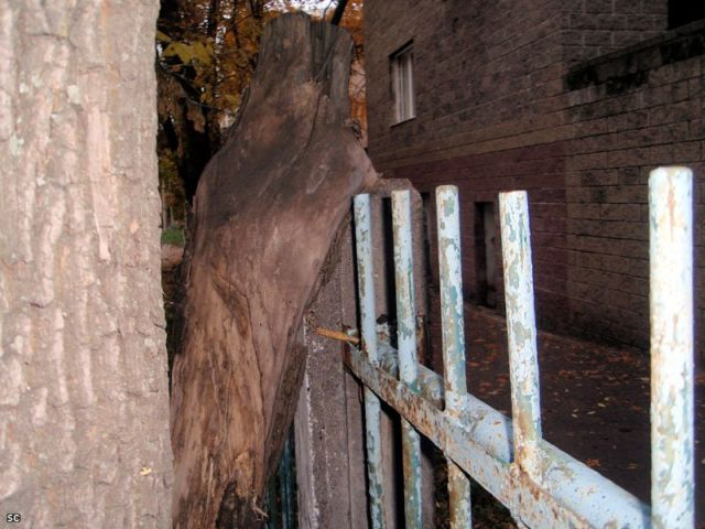 Trees and fences. Something mystical is going on there ;) (9 pics)