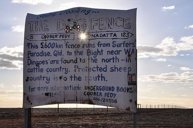 One of the world's longest fences (12 pics + text)