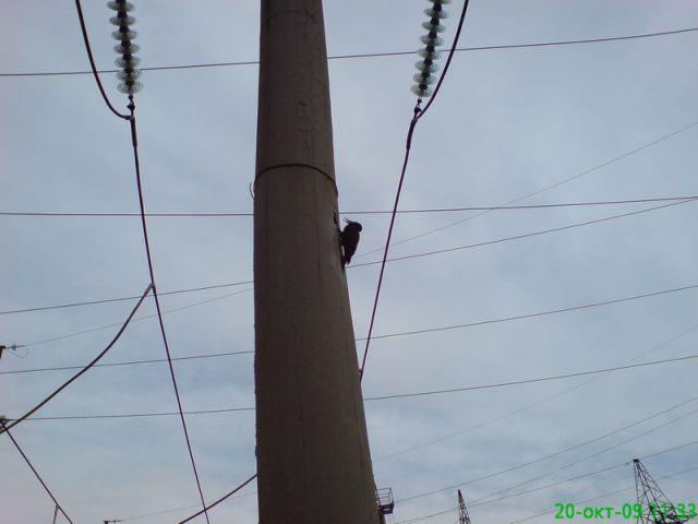 Woodpecker-terminator )) (3 pics)