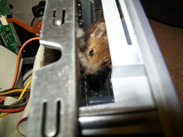 What You Can Find in Your Computer System Unit (3 pics)