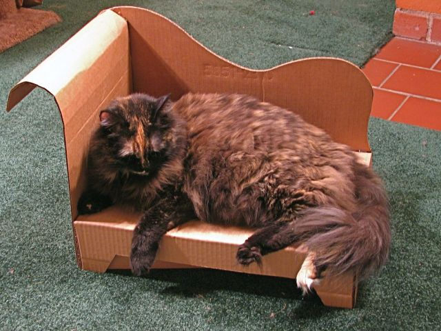 DIY Cat Cardboard Chaise Longue (20 pics)