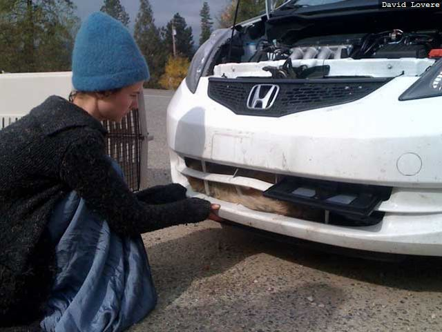 Car vs. Coyote (6 pics)