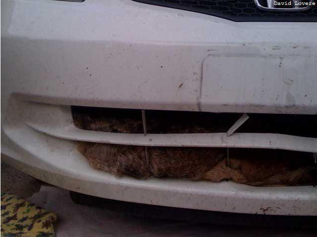 Car vs. Coyote (6 pics)