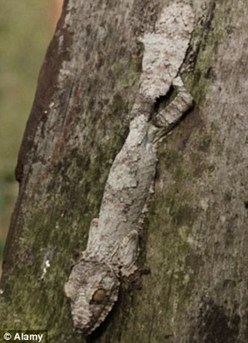 Amazing natural camouflage (18 pics)