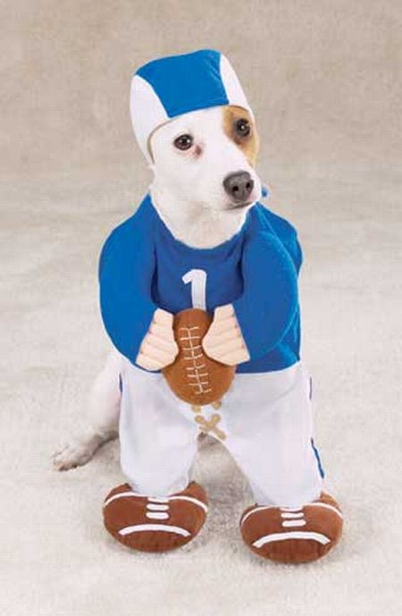 Crazy Halloween costumes for dogs (17 pics)