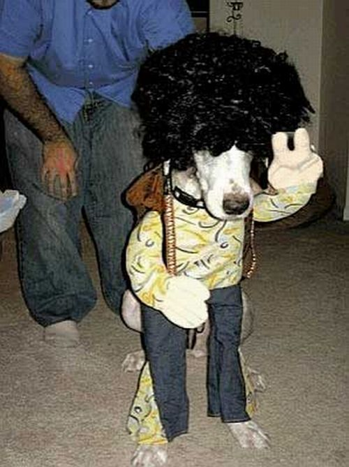 Crazy Halloween costumes for dogs (17 pics) - Picture #9 & Crazy Halloween costumes for dogs (17 pics) - Picture #9 - Izismile.com