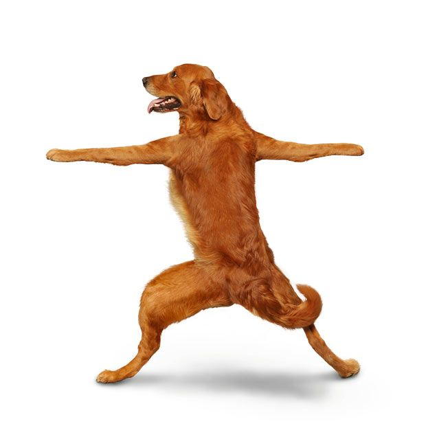Weird 'Yoga Dogs' Calendar! (28 pics)