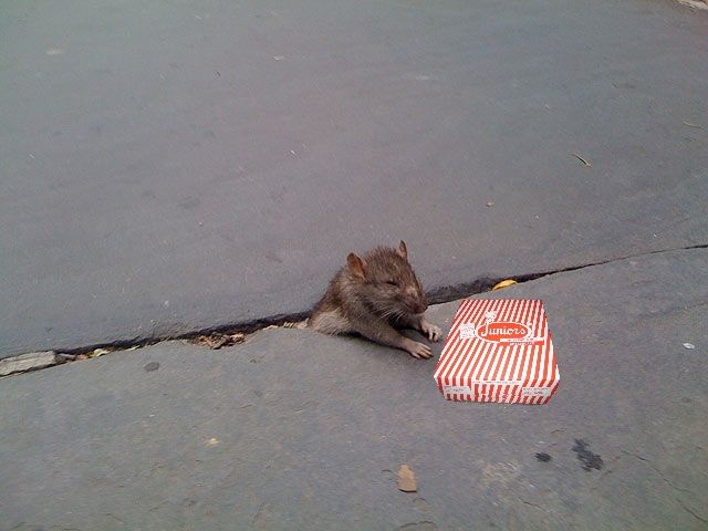 Rat Stuck in Sidewalk + some Photoshopping (33 pics)
