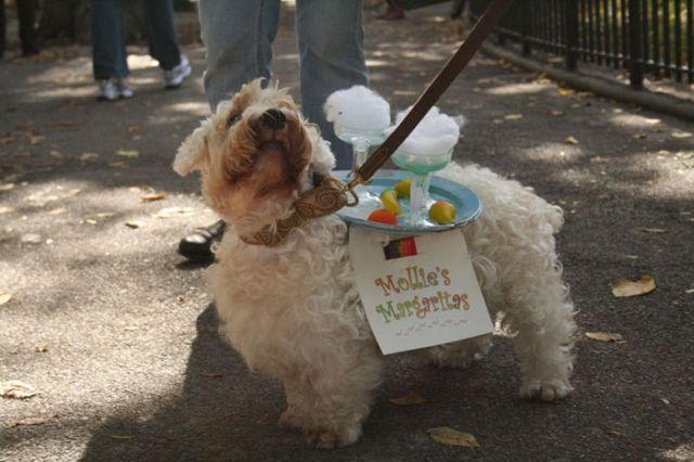 Another set of Halloween dog costumes (43 pics)