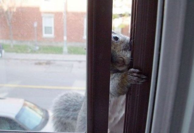 Very Hungry Squirrel (8 pics)