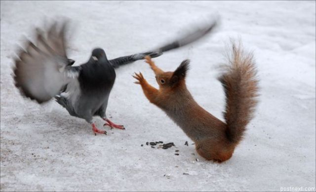 These funny animals (58 pics)