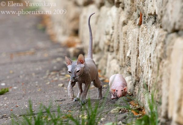 Funny and Unusual Friendship between 2 Hairless Creatures (12 pics)