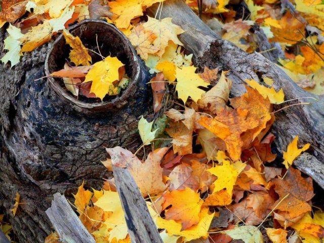 Beautiful autumn (24 pics)