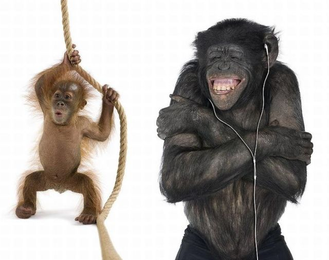 Unusual Photo Project - Animals on White Backgrounds (23 pics)