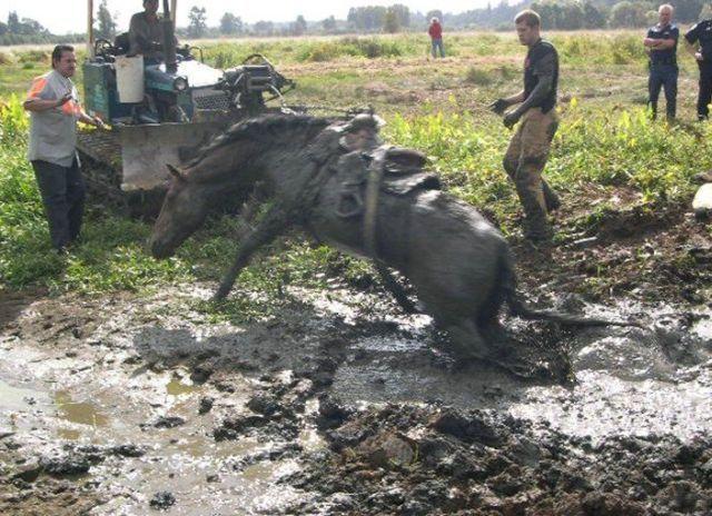 Rescue of a Horse (4 pics)