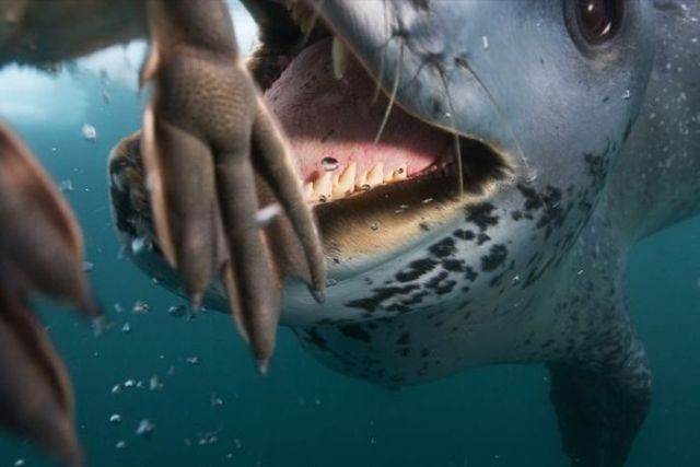What creature these jaws belong to? (14 pics)