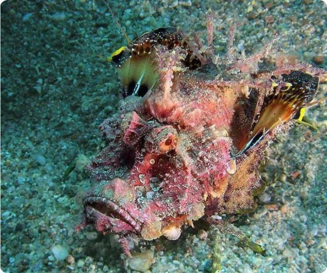 Beautiful Underwater Photographs (13 pics)