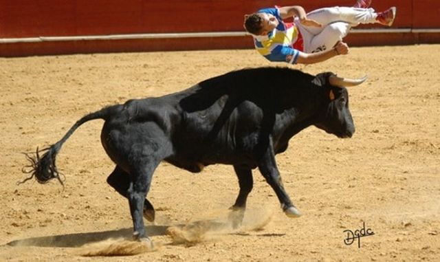 Great Photos of Recortadores Performing Bull-Leaping (36 pics + 1 video)