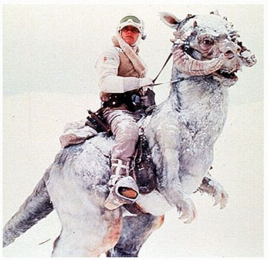 """Luke Skywalker on a Tauntaun"" Incredible Costume (31 pics + 1 video)"