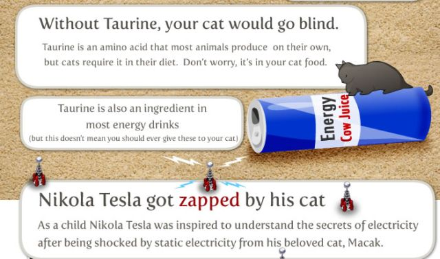 Interesting Facts about Your Cat (8 pics)