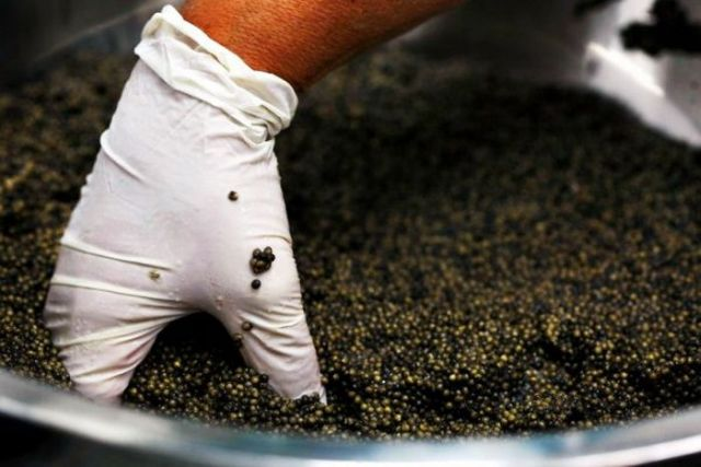 How They Make Black Caviar (24 pics)