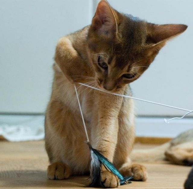 Playing with Cats (12 pics)