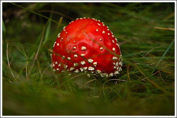 Colorful Mushrooms (10 pics)