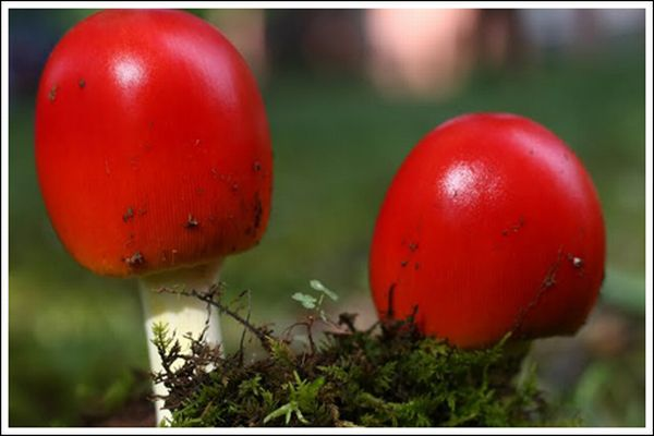Colorful Mushrooms (10 pics)