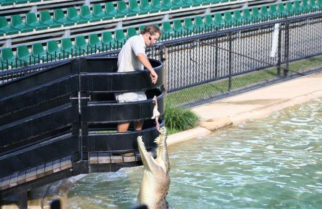 Feeding Crocodiles (28 pics)