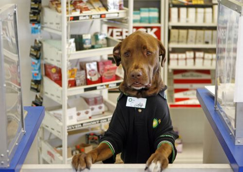 The Dog Employee of the Month (4 pics)