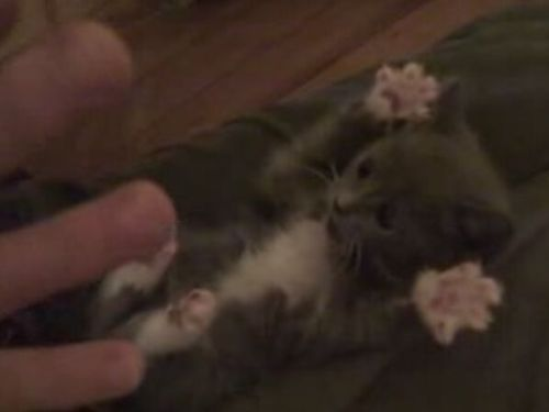 Surprised Kitty – the Cutest Thing Ever! (0.6 Mb)