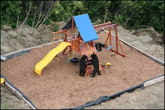 When Bears Squat in the Playground (4 pics)
