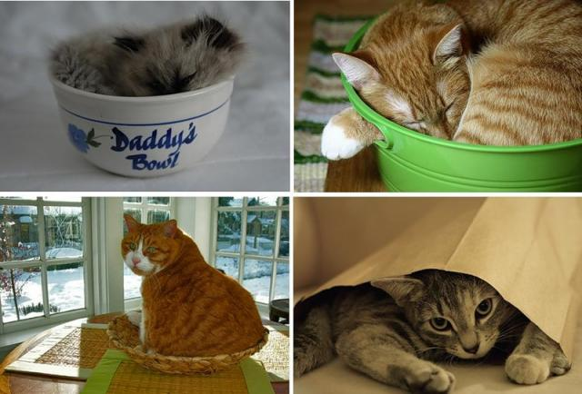 Cats Are Everywhere (48 pics)