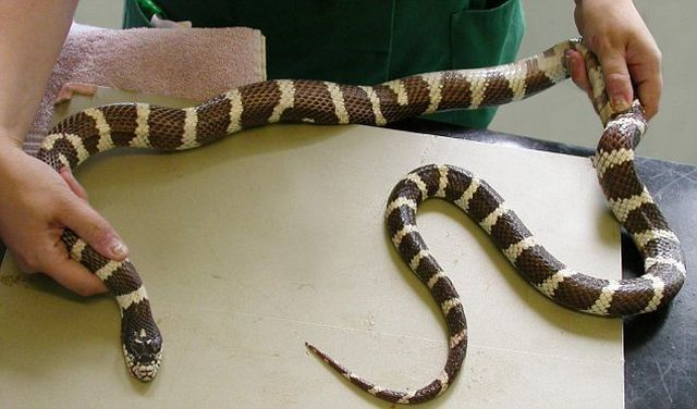 The Most Stupid Snake in the World (2 pics)
