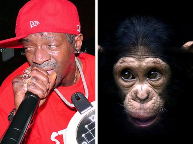 Celebrities That Look Like Animals (22 pics)