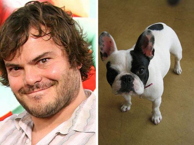 Celebrities That Look Like Animals (22 pics)