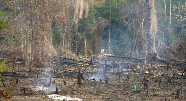 Amazon Drought (16 pics)