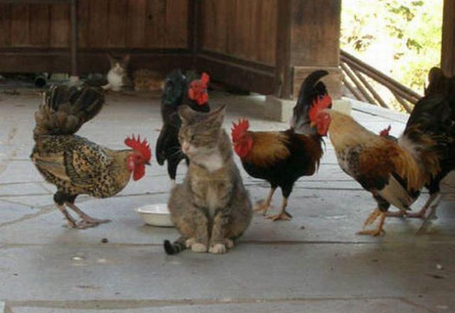 4 Cocks vs 1 Pussy! (2 pics)