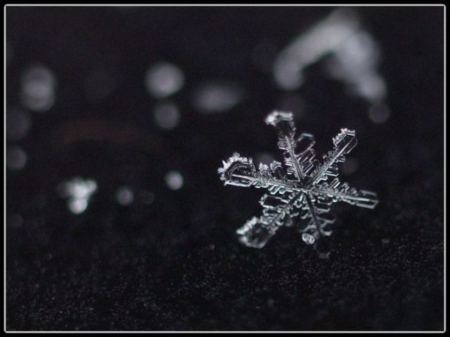 Unique and Beautiful Snowflakes (49 pics)