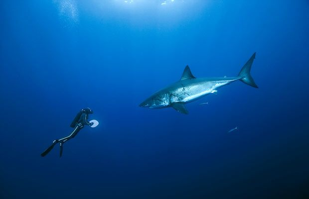 Great Pictures of Inhabitants of the Oceans (15 pics)