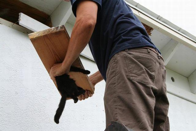 Cat's Head Stuck in a Hole (9 pics)
