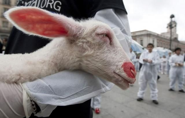 Demonstration of Defenders of Animal Rights in Madrid (10 pics)