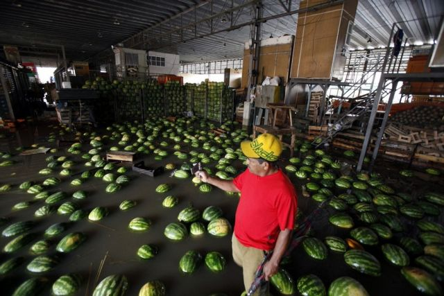 Flood in Brazil…Water Melons Swim Away (12 pics)