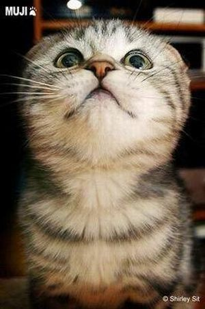 The Cutest Kitty Ever (13 pics)