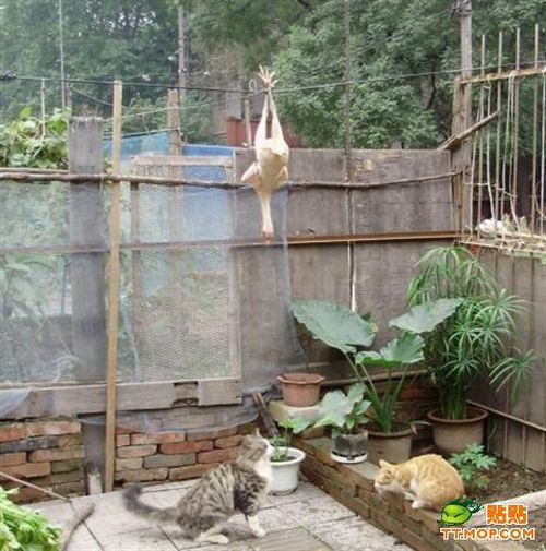 Mission: Impossible (9 pics)