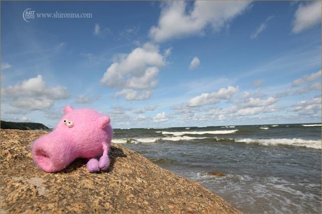 Journey of Sweeney the Pig (18 pics)